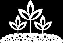Plantering av växter & Gräsmattor